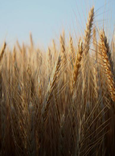 https://www.zx-ventures.com/wp-content/uploads/2021/06/plant-based-barley-ingredients.jpg